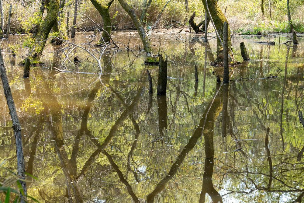 森の水面_b0126495_18470621.jpg