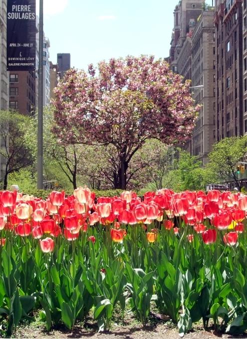 さくらのお花に癒やされます_b0007805_02150378.jpg