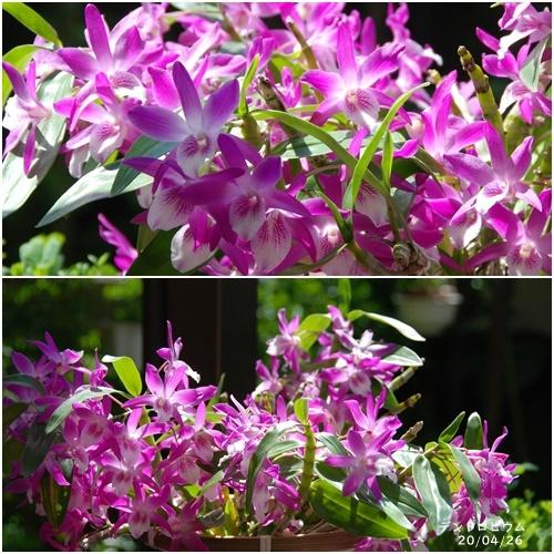 庭の花_c0051105_20104420.jpg