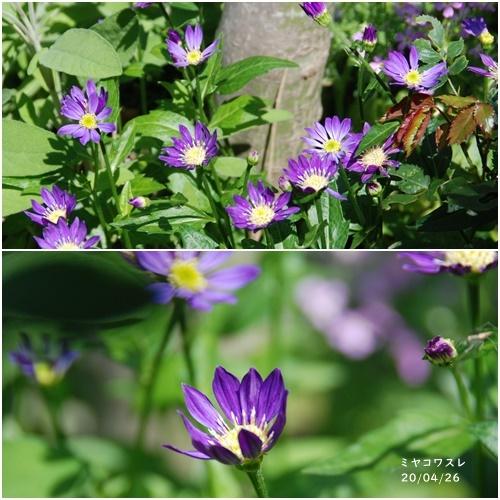 庭の花_c0051105_20111472.jpg