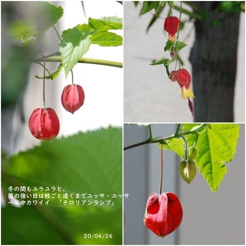 庭の花_c0051105_20114598.jpg