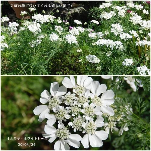 庭の花_c0051105_20120853.jpg