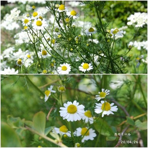 庭の花_c0051105_20123215.jpg