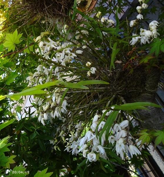 庭の花_c0051105_20140755.jpg