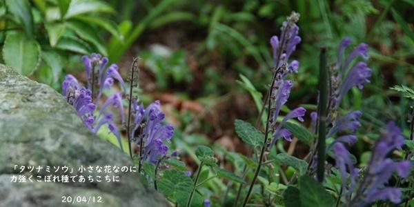 庭の花_c0051105_20142749.jpg