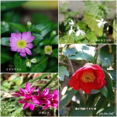 庭の花_c0051105_20263463.jpg