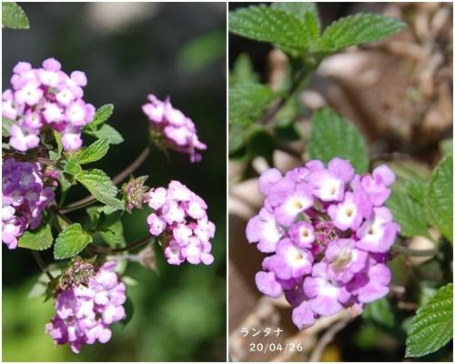 庭の花_c0051105_20270303.jpg