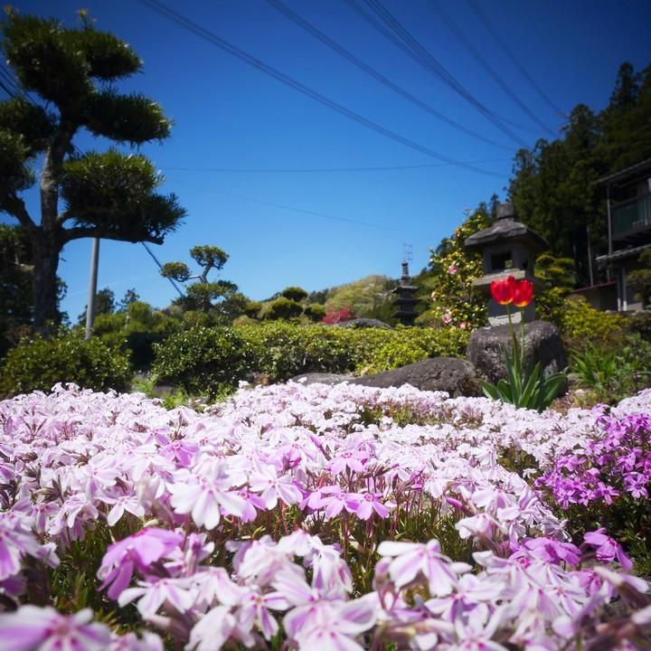 庭の春景色(その1)_a0268412_20423615.jpg
