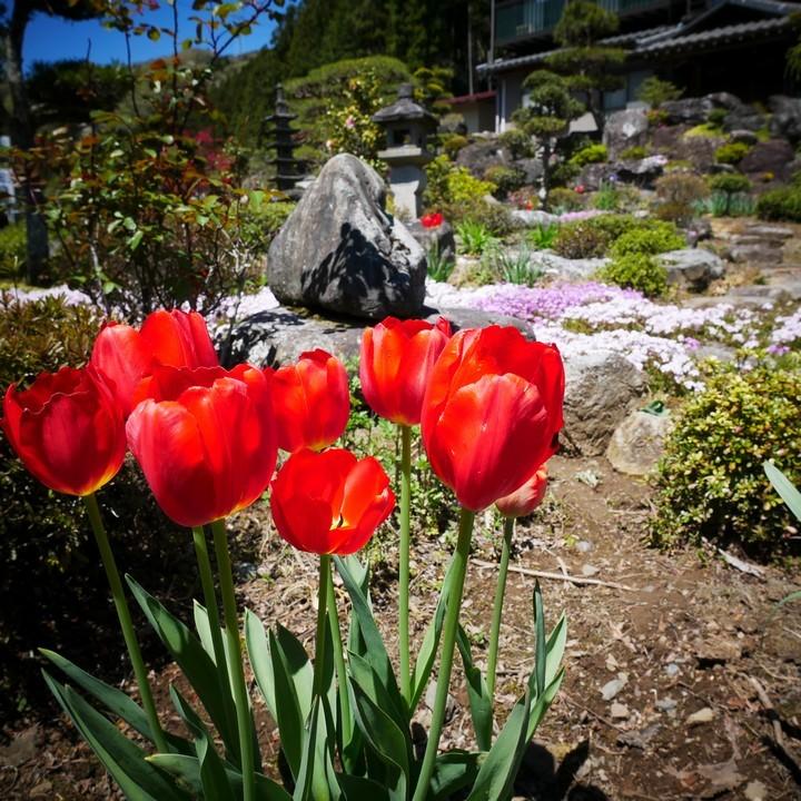 庭の春景色(その1)_a0268412_20423928.jpg