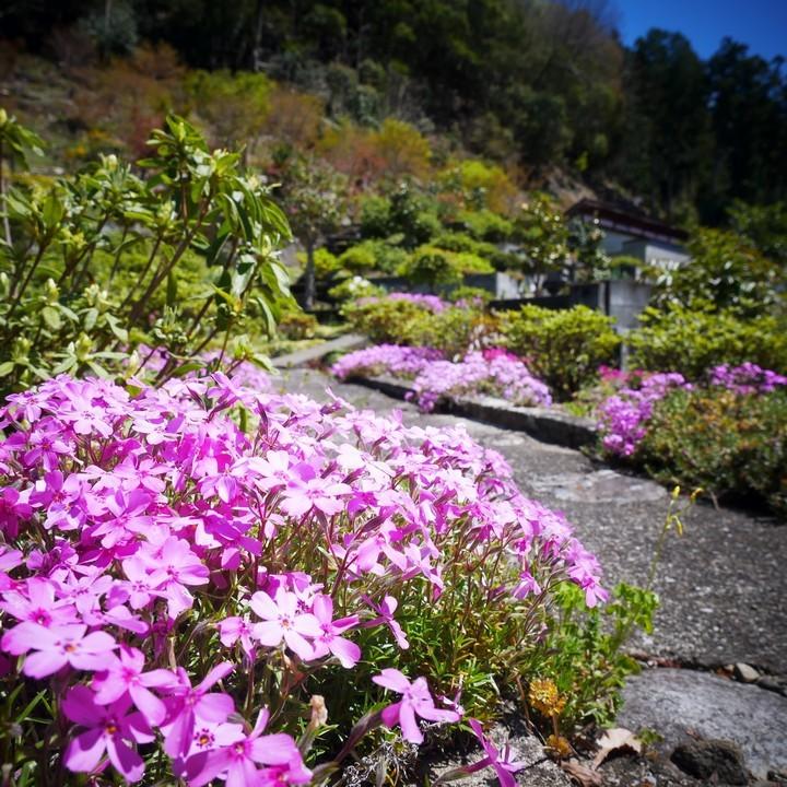 庭の春景色(その1)_a0268412_20424306.jpg