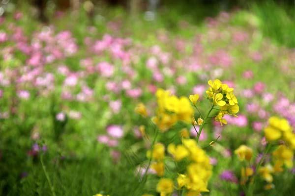 菜園の周りも春色に_e0048413_21362470.jpg