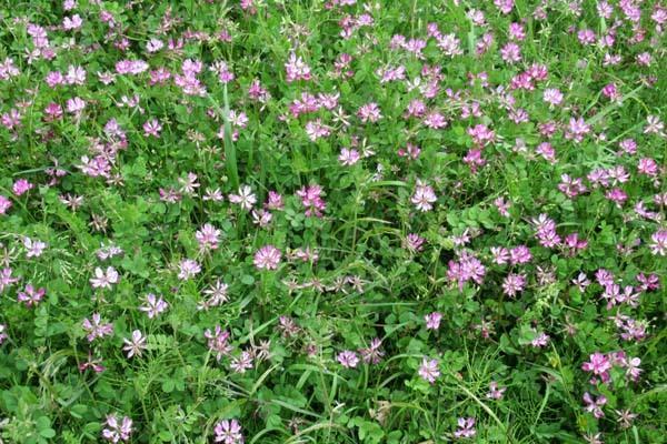 菜園の周りも春色に_e0048413_21363451.jpg