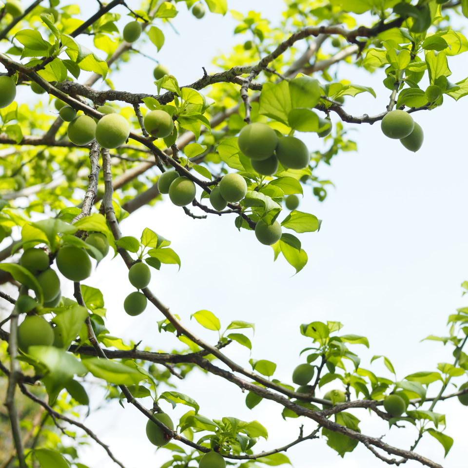 眩しい季節_b0206421_11152276.jpg