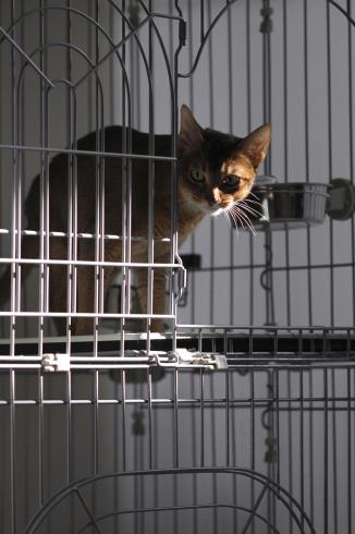 [猫的]警戒モード_e0090124_09475553.jpg