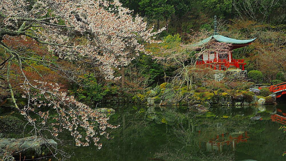 醍醐寺 桜Ⅳ_a0287533_00361164.jpg
