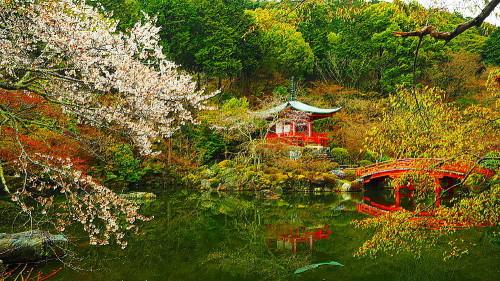 醍醐寺 桜Ⅳ_a0287533_00361167.jpg