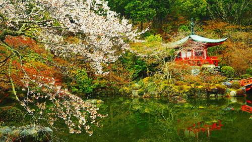 醍醐寺 桜Ⅳ_a0287533_00361168.jpg