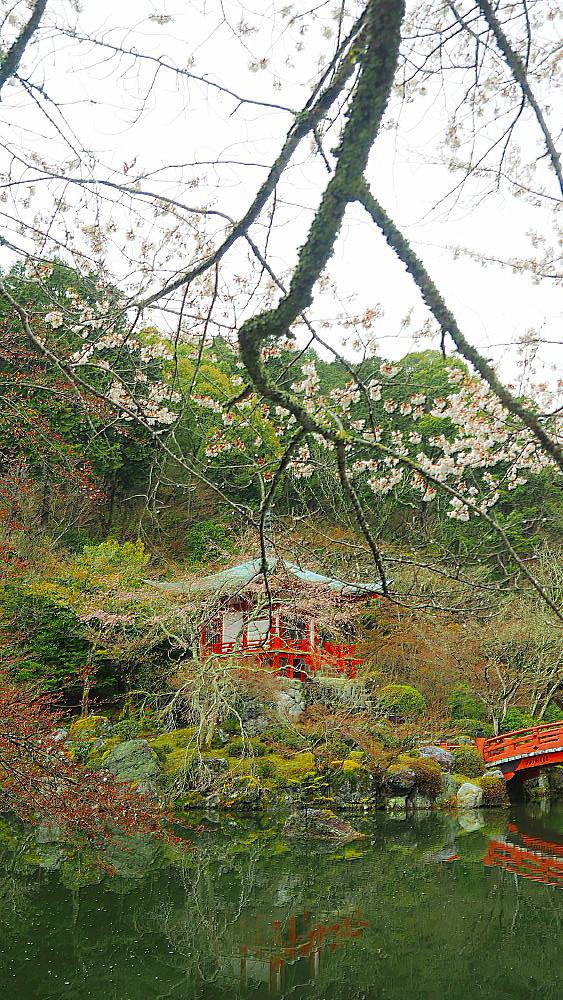 醍醐寺 桜Ⅳ_a0287533_00361273.jpg