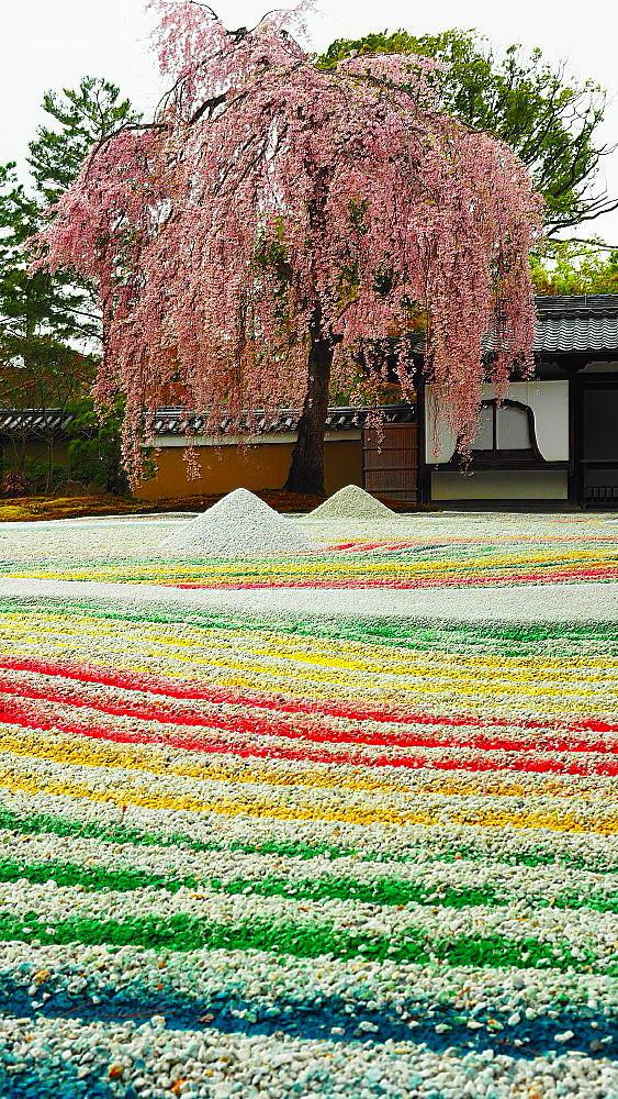 高台寺 枝垂れ桜_a0287533_09305765.jpg