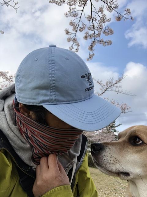 今年の桜は長持ち_b0031538_23172287.jpeg