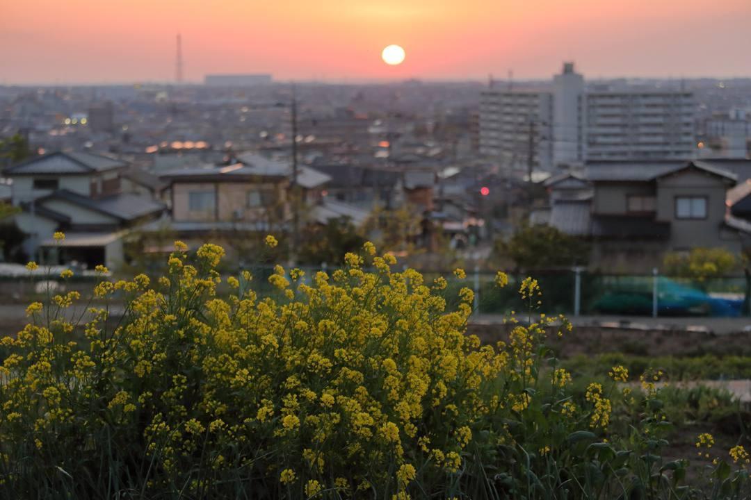 菜の花と夕焼け_e0403850_20270237.jpg