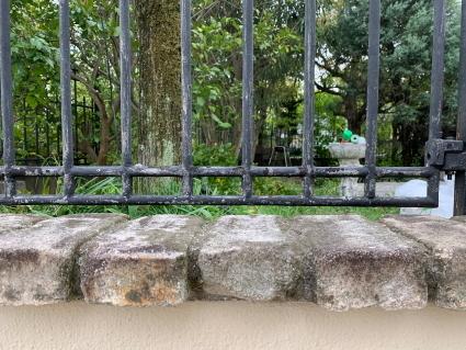 庭のフェンスを塗ってみた_f0185066_21060344.jpg