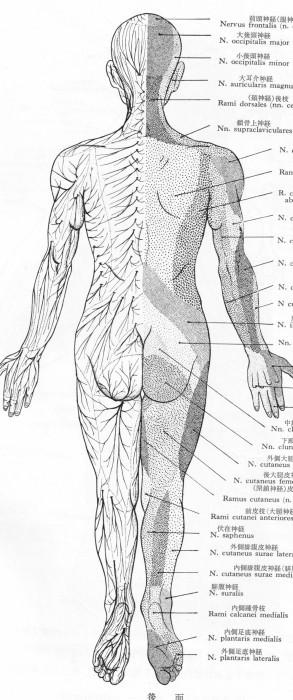 「痛み」の勉強、お医者さん任せにはできない_b0052170_17260493.jpg