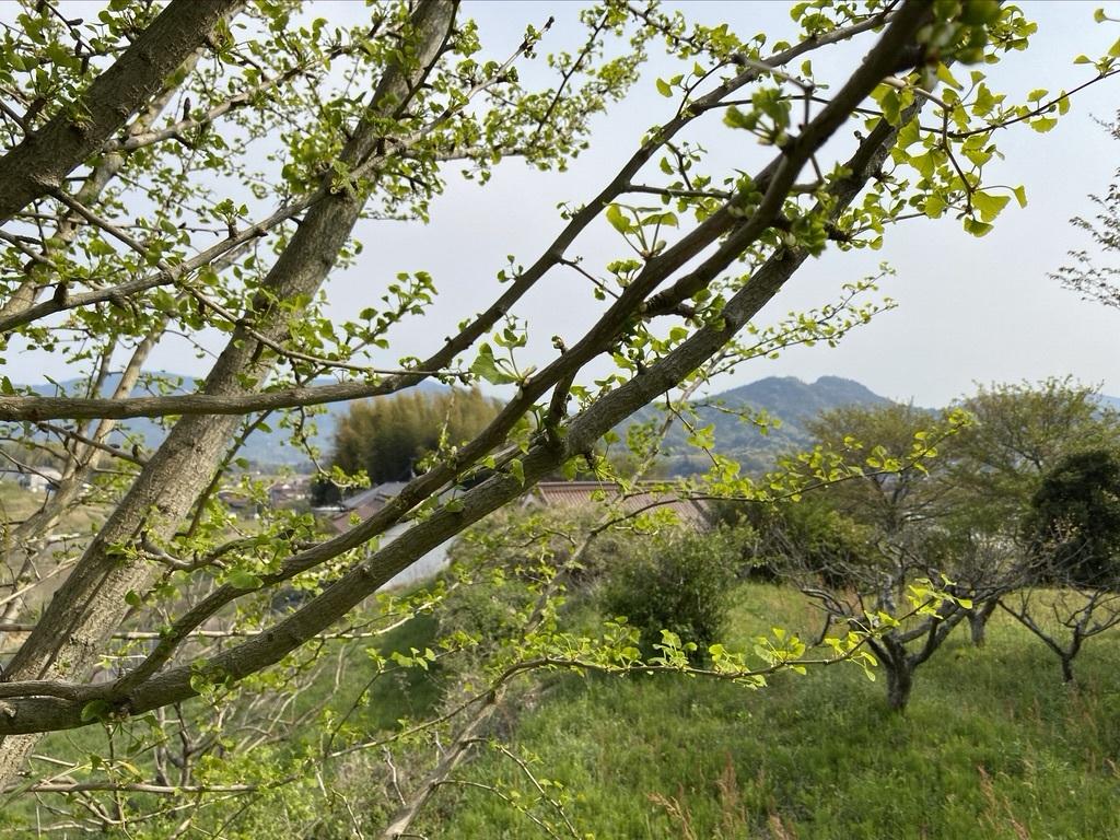 裏山を抜けて 〜昭和池の辺りの八重桜〜_c0334574_16345698.jpeg