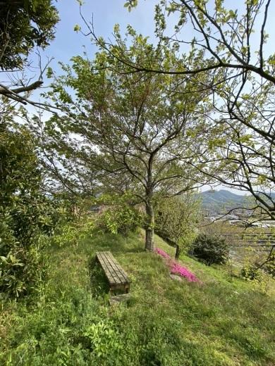 裏山を抜けて 〜昭和池の辺りの八重桜〜_c0334574_16353364.jpeg