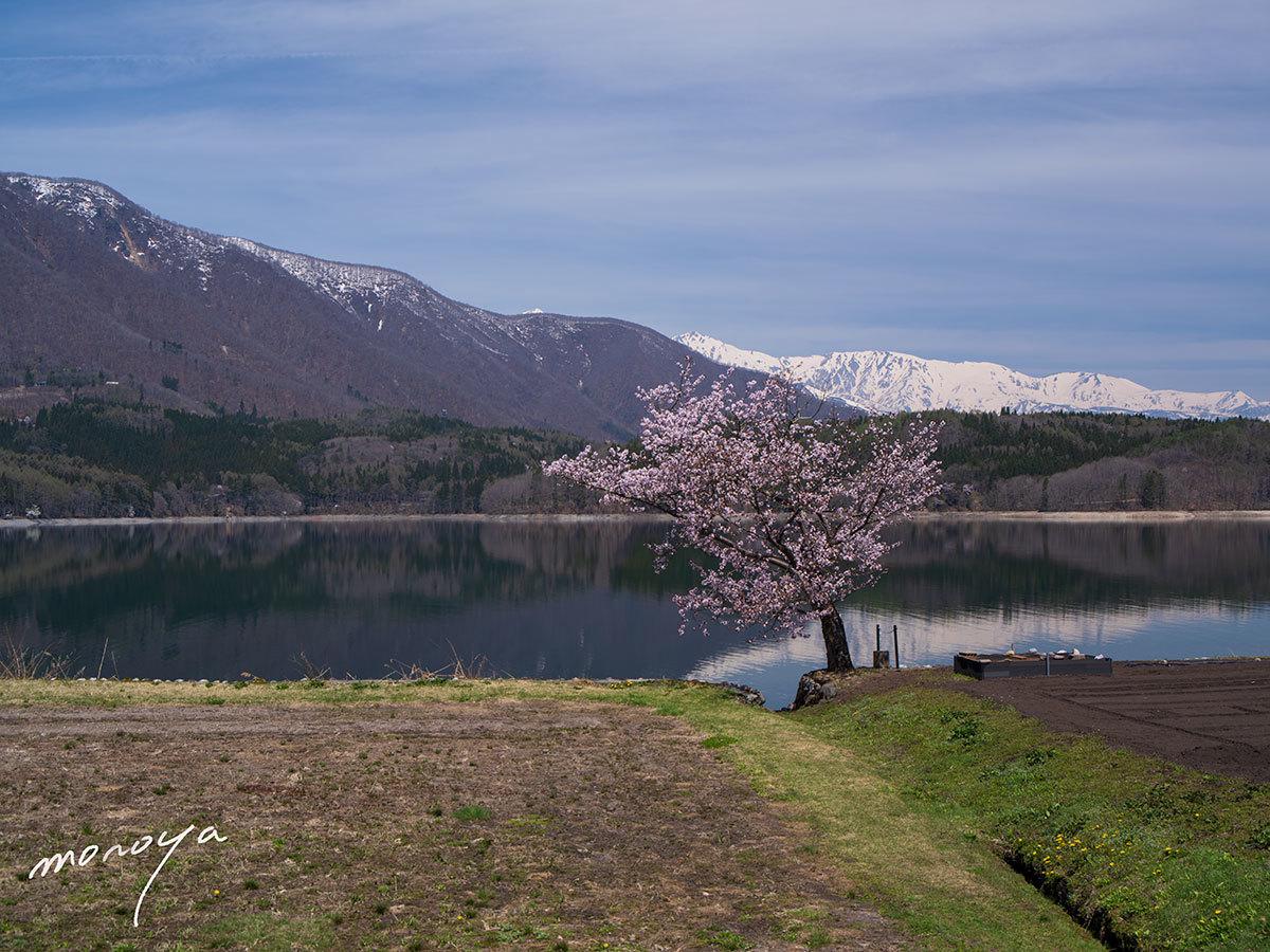 青木湖の桜_c0085877_06090418.jpg