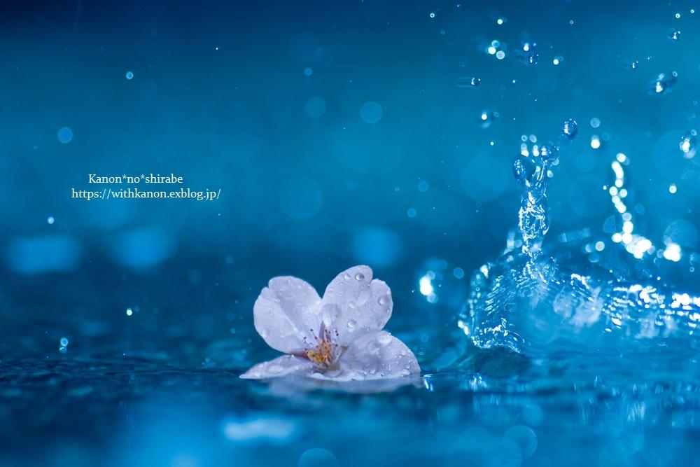 桜雨④_d0148187_18003209.jpg