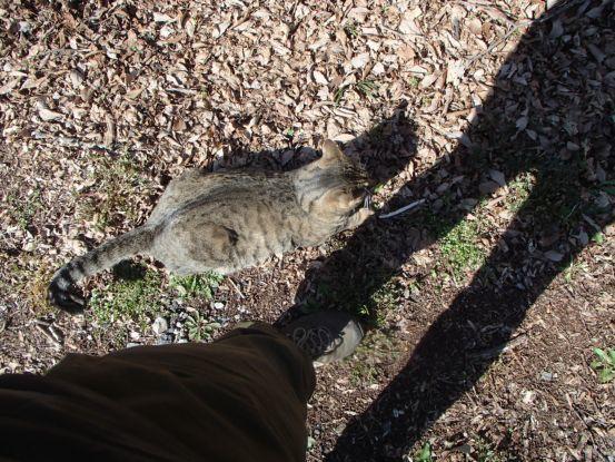 猫たちと庭散歩の日々_f0064906_14520309.jpg