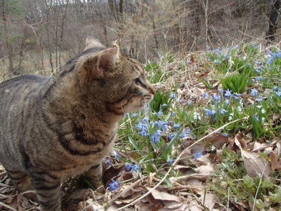 猫たちと庭散歩の日々_f0064906_14520615.jpg