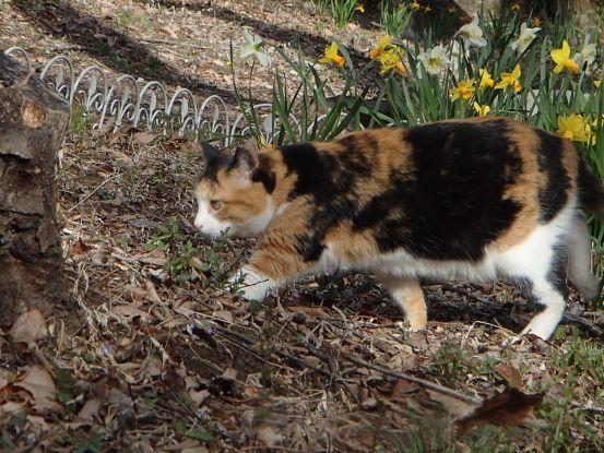 猫たちと庭散歩の日々_f0064906_14521938.jpg