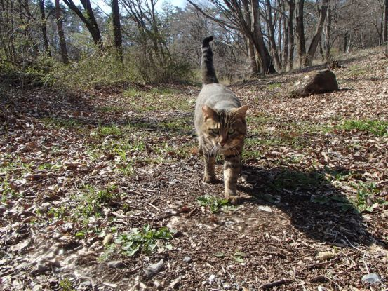 猫たちと庭散歩の日々_f0064906_14522341.jpg