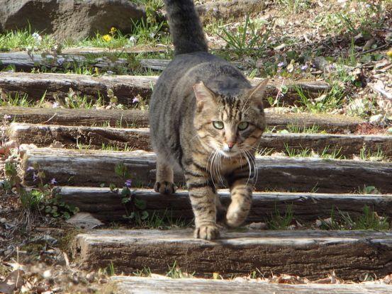 猫たちと庭散歩の日々_f0064906_14522788.jpg