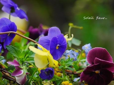 お部屋で、春の野を…♪_c0098807_19564656.jpg