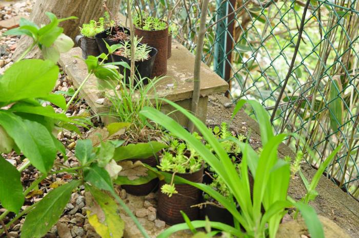 I\'m in my garden_f0188408_10205485.jpg