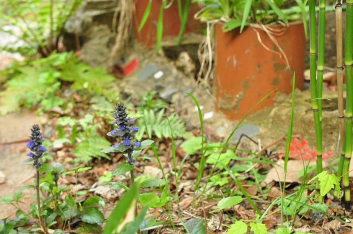 I\'m in my garden_f0188408_10221403.jpg