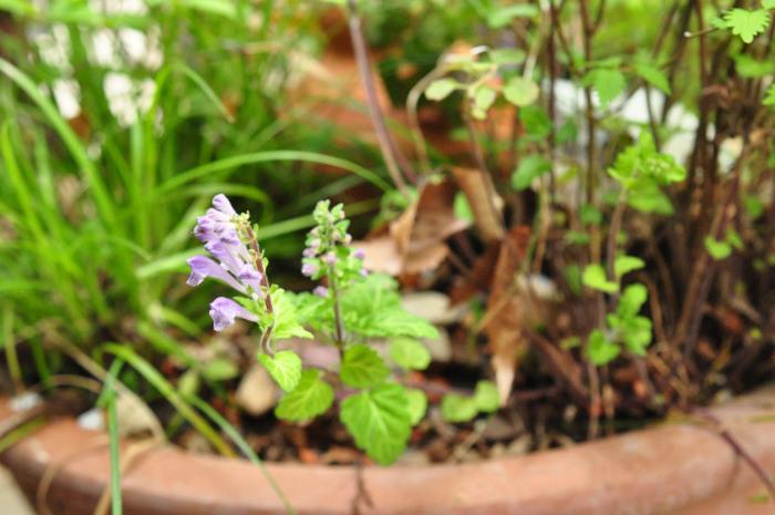 I\'m in my garden_f0188408_10224054.jpg