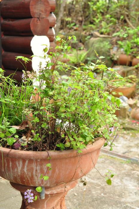 I\'m in my garden_f0188408_10225211.jpg