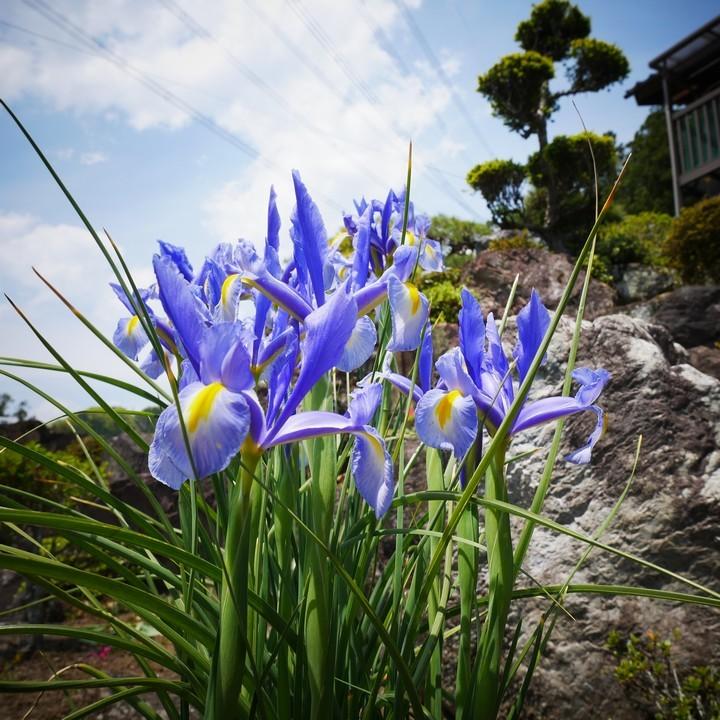 庭の春景色(その2)_a0268412_22095068.jpg