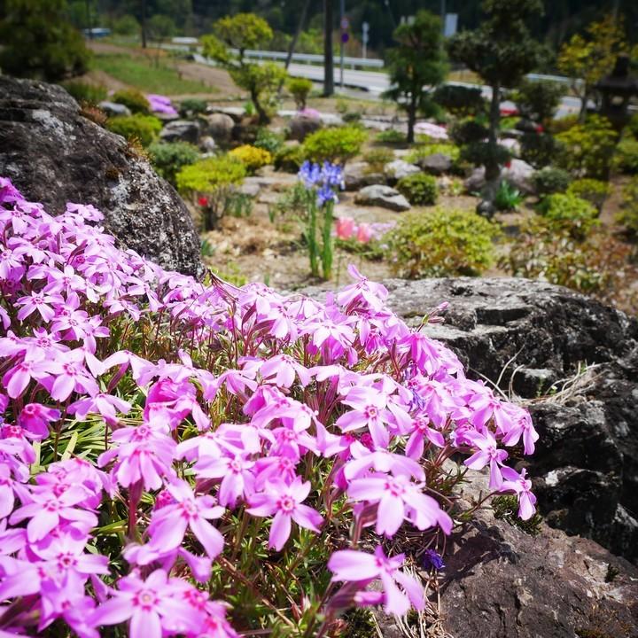 庭の春景色(その2)_a0268412_22095395.jpg