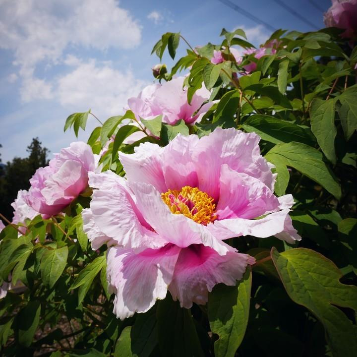 庭の春景色(その2)_a0268412_22115452.jpg
