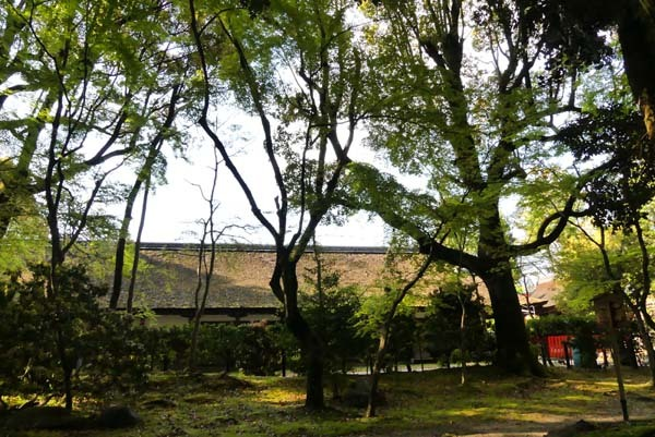 緑がいっぱい 上賀茂神社_e0048413_22082990.jpg