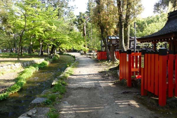 緑がいっぱい 上賀茂神社_e0048413_22084079.jpg