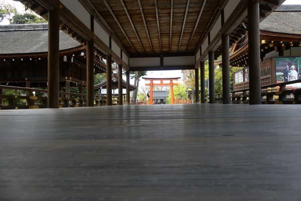 緑がいっぱい 上賀茂神社_e0048413_22092121.jpg