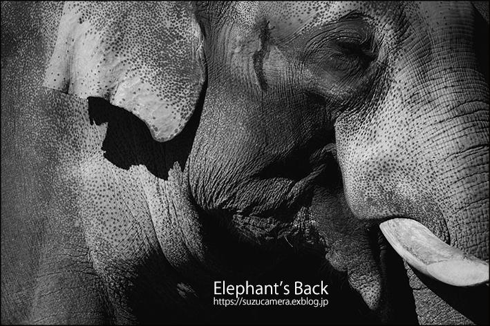 象の背_f0100215_21573736.jpg