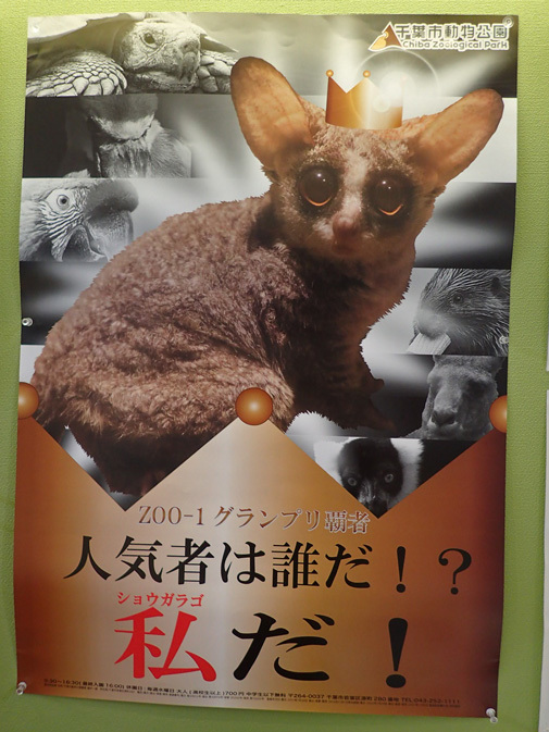 タマリン!タマリン!~動物科学館の動物たち(千葉市動物公園 June 2019)_b0355317_22162352.jpg