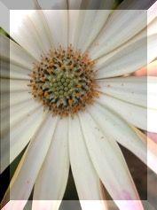 それでも 花は咲く・・・・。_e0054438_12581464.jpg